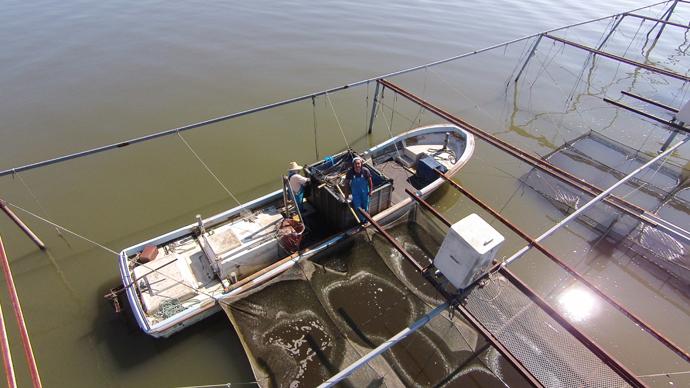 霞ヶ浦の鯉養殖場空中撮影写真